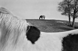 Photographie en Noir & Blanc